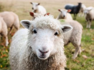 současná pandemie se netýká zvířat
