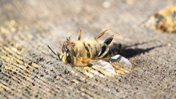 Pesticidy a včely